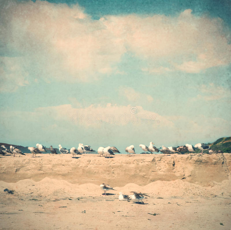 Download Vintage Style Beach Picture With Seagulls Stock Photo - Image: 22586976