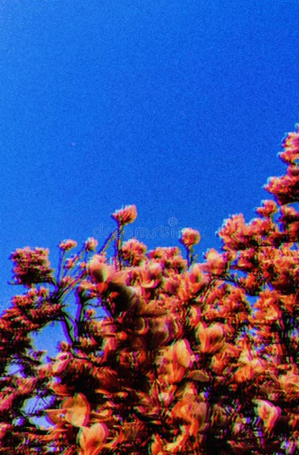Vintage Style Cherry Blossom Seasonal Trees stock photos