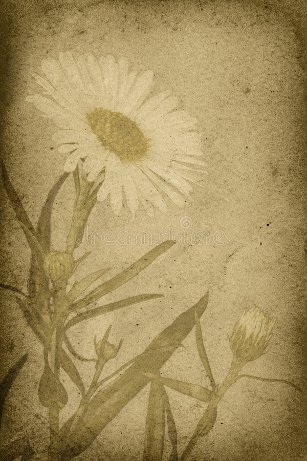 Download Vintage Style Daisy Imprint Background Stock Illustration - Image: 7839679