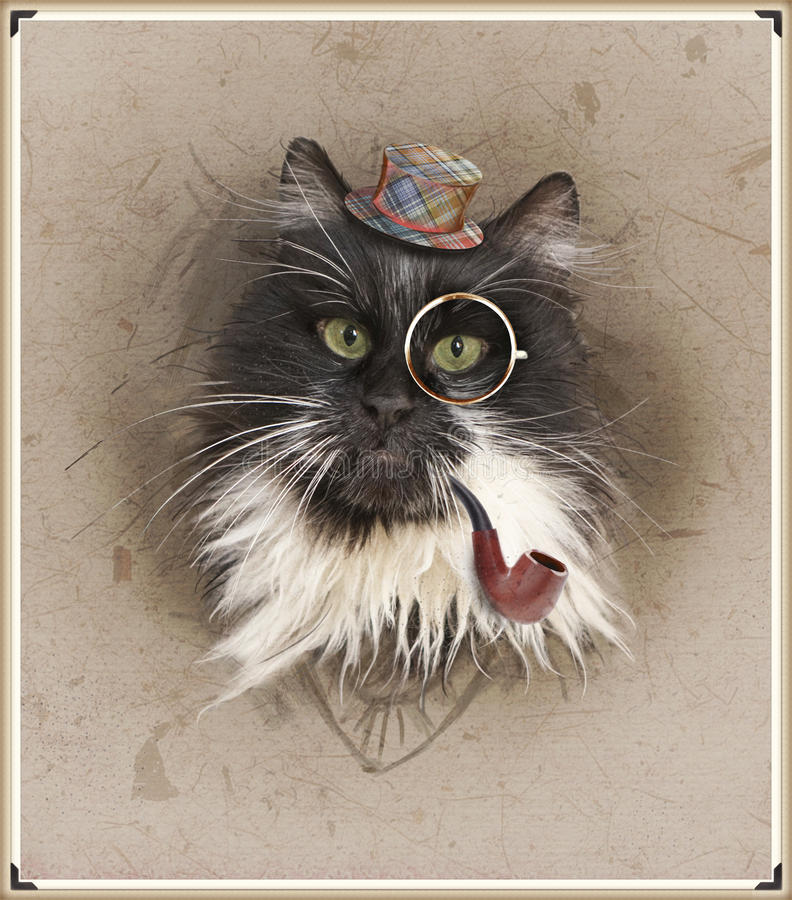 Vintage style photo of the dressed cat stock photo