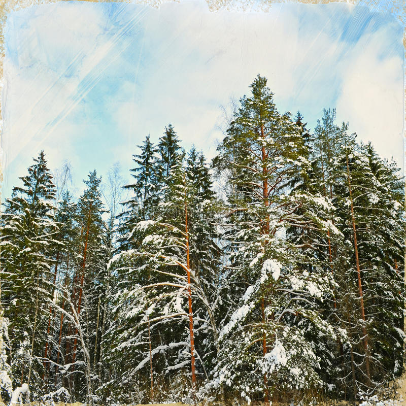 Vintage stylized photo of winter forest royalty free stock photo