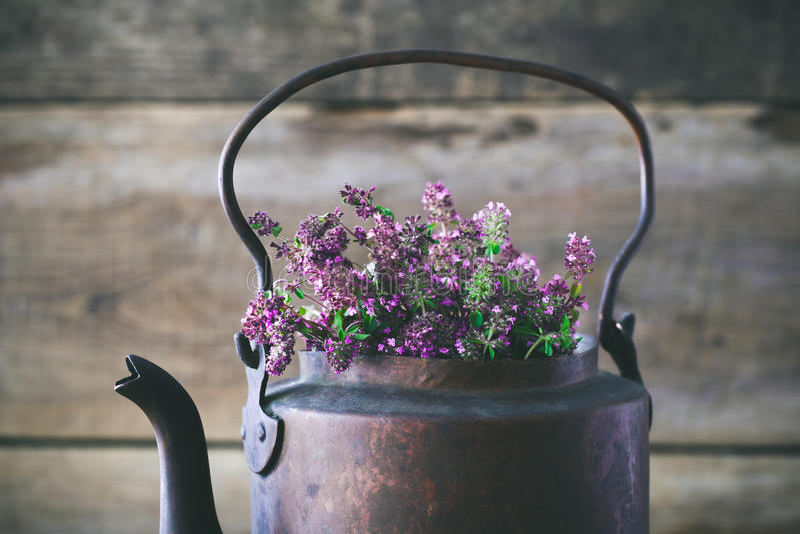 Vintage tea kettle full of thyme flowers for healthy herbal tea. royalty free stock image