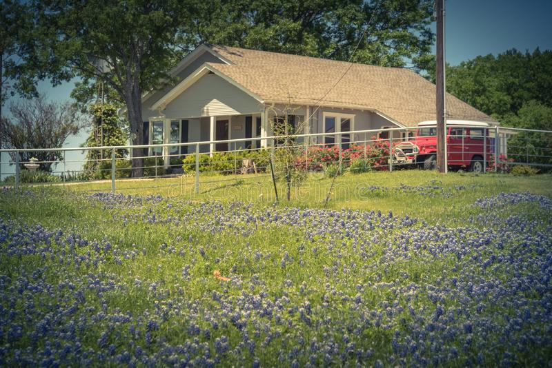 Filtered image colorful Bluebonnet blossom at farm in North Texas, America stock photos
