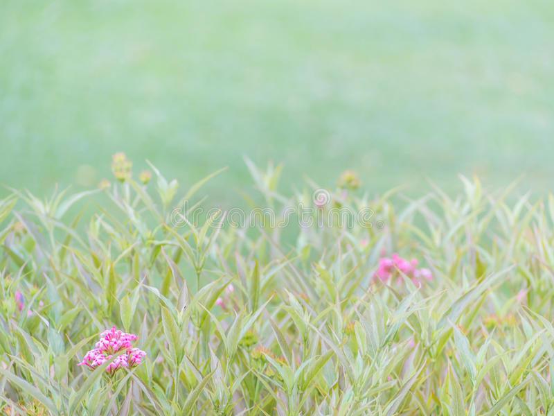 Vintage tone of flowers and blurry nature background stock image