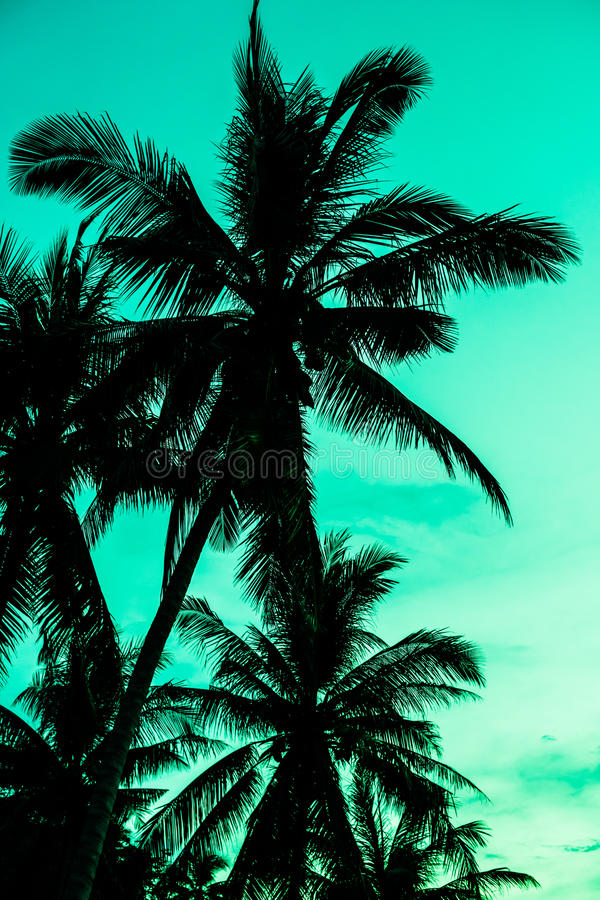 Vintage toned picture of palm silhouette under sky royalty free stock photo