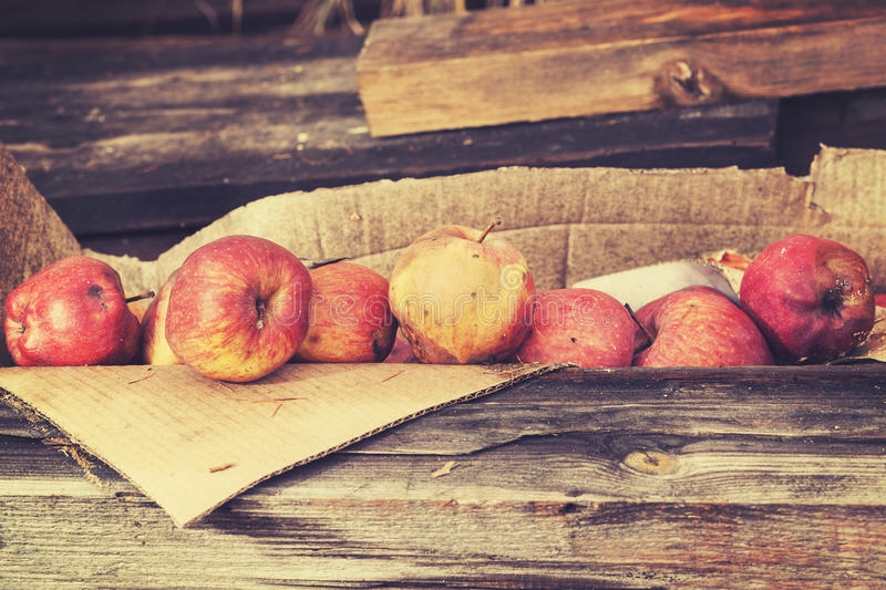 Vintage toned rotten apples in carton on wooden boards.  royalty free stock image