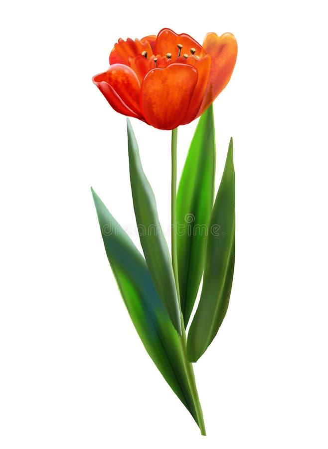 VINTAGE a tulipa VERMELHA imagem de stock