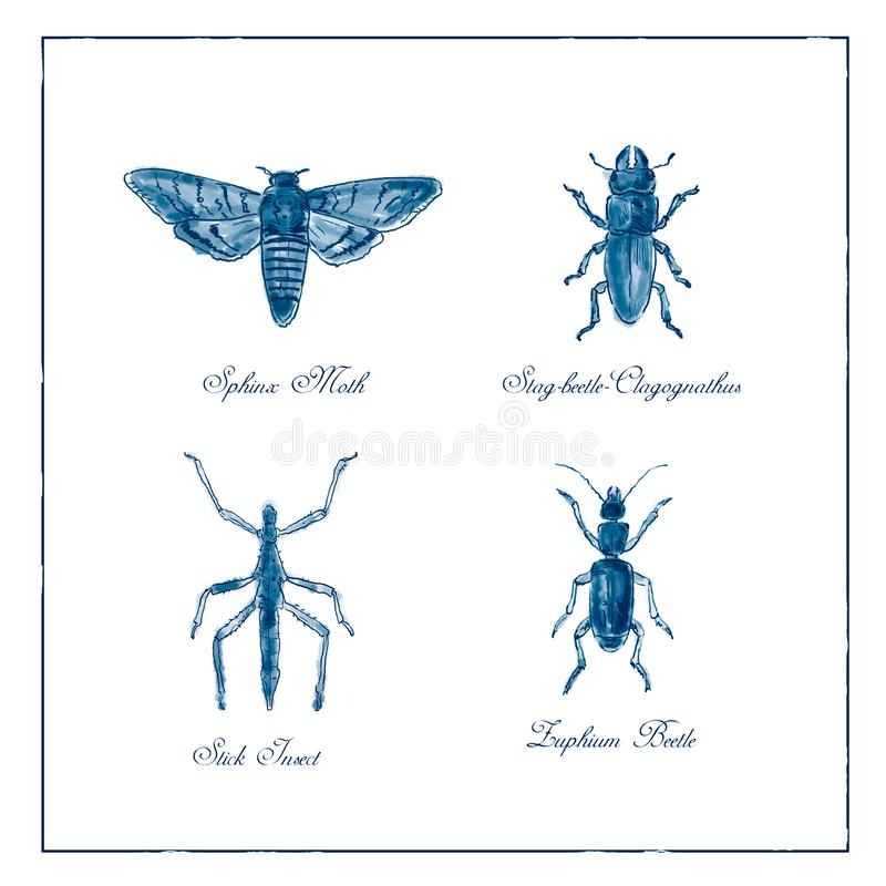 Sphinx Moth, Stag beetle, Stick Insect and Zuphium Beetle Vintage Collection royalty free illustration