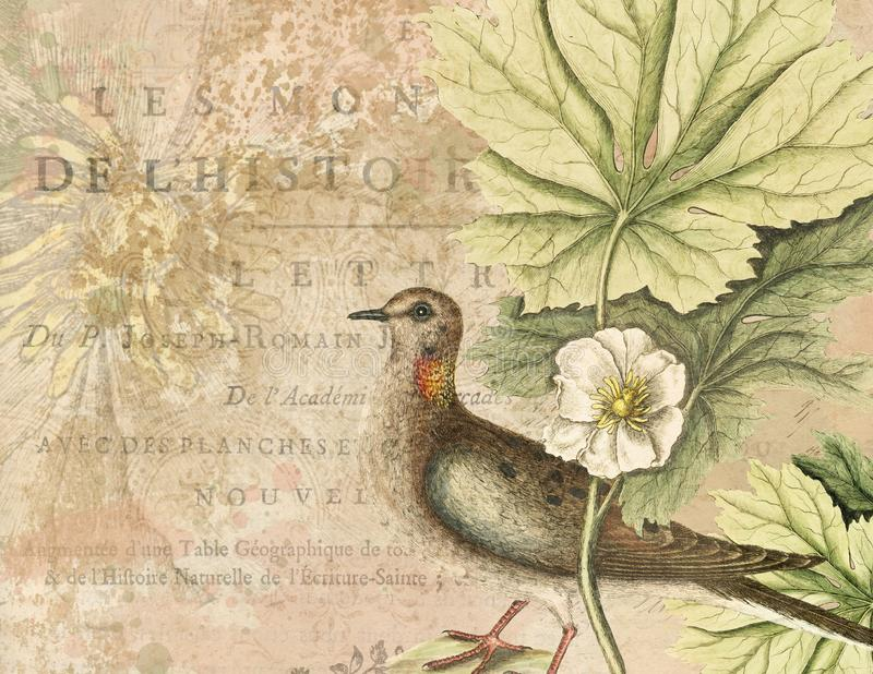 Vintage Watercolor Bird Illustration - Collage Background Paper - Distressed Texture - Natural History stock illustration