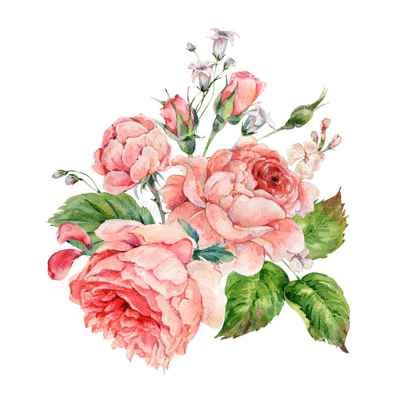 Vintage watercolor pink english roses stock illustration