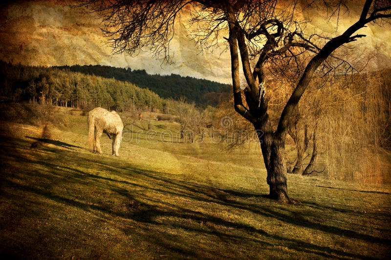 Vintage white horse stock photography