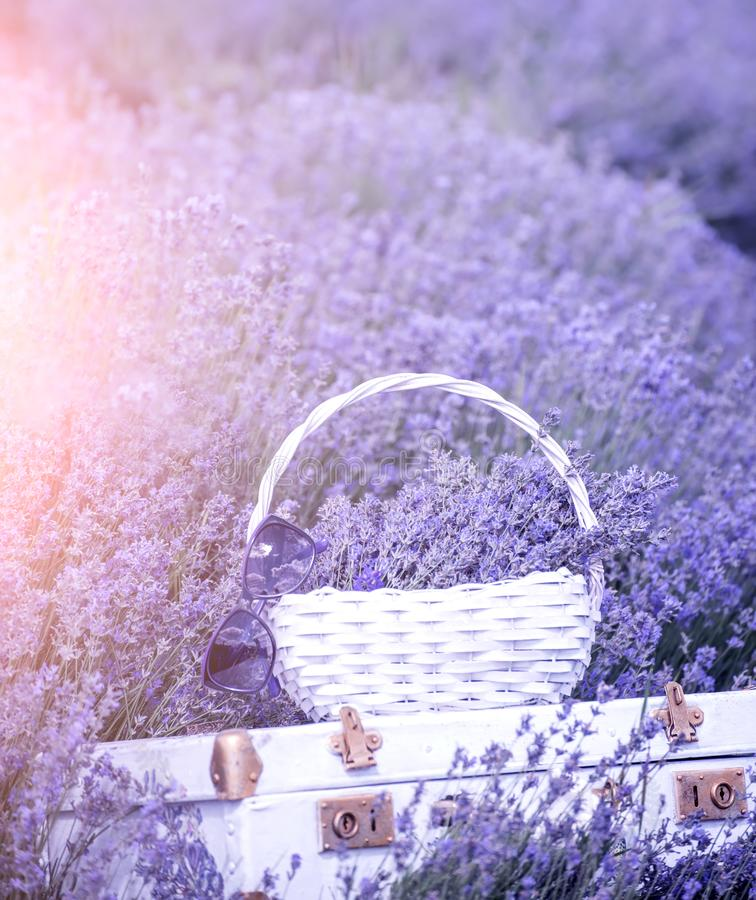 Vintage white suitcase and a white basket with lavender flo in a lavender field. royalty free stock photo
