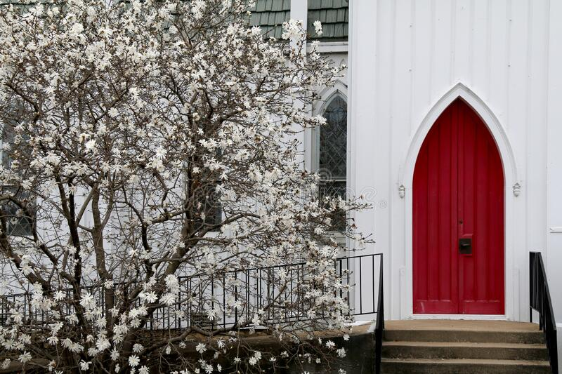 White wood church red arch doors budding dogwood stock photography