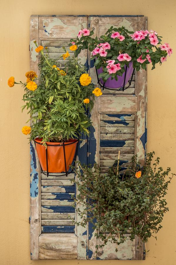 Vintage window with closed wooden shutters and fresh flowers. Close up stock photo