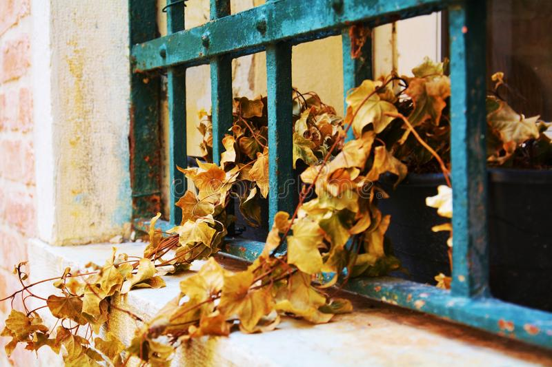 Vintage window. Old rusty window of and old building. Old rusty window and dry plants. Construction site. Craps are placed at random. Decaying wall, vintage royalty free stock image