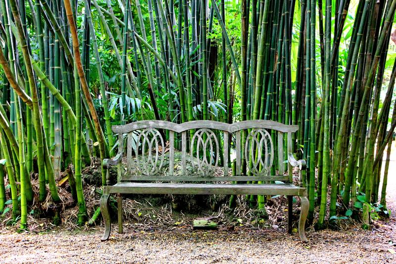 Wood Bench In Garden Stock Photo Image Of Furniture
