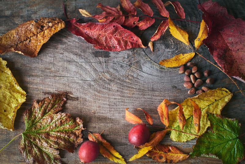 Vintage wooden background with dried autumn leaves, gifts of autumn and copy space. From above royalty free stock photos