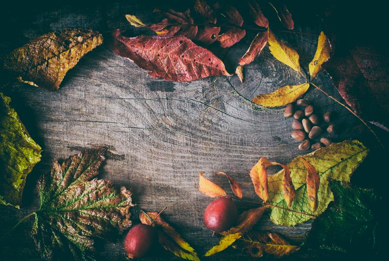Vintage wooden background with dried autumn leaves, gifts of autumn and copy space. From above royalty free stock photography