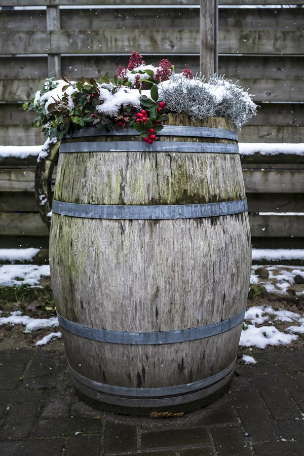Vintage wooden barrel with various plants growing in it, against the background of the old fence, and falling snowflakes, in the. Countryside. Close-up royalty free stock image