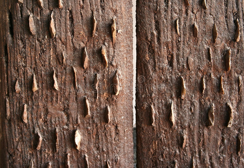 Download Vintage Wooden Boards Wall Stock Photography - Image: 12059582