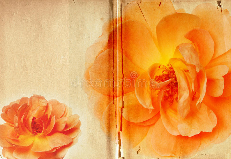 Vintage Yellow Rose Collage Antique Book stock photos