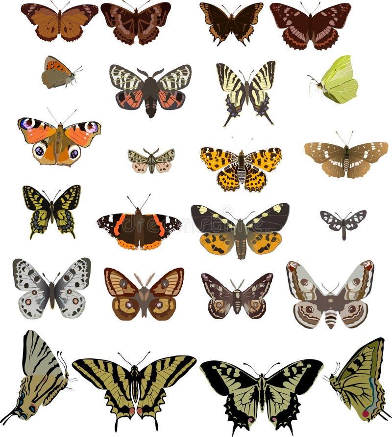 Vinte quatro borboletas diferentes ilustração do vetor