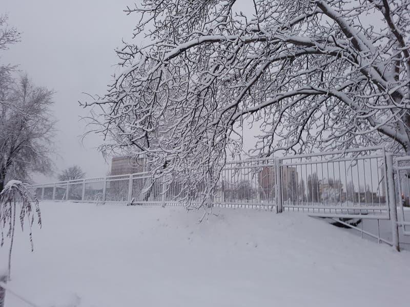 Vinter royaltyfria foton