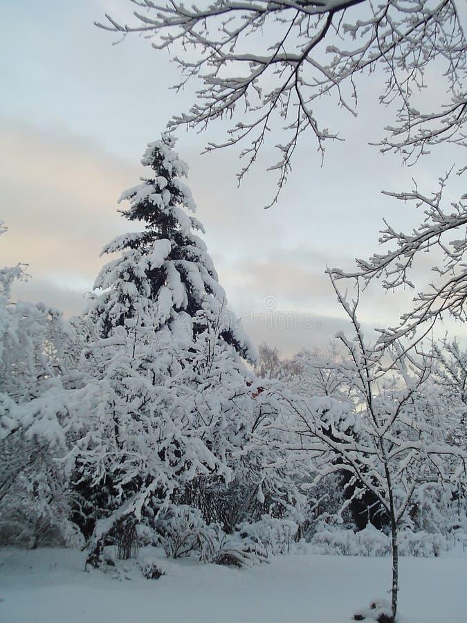 Download Vinter arkivfoto. Bild av filialen, trädgård, nordligt - 502702