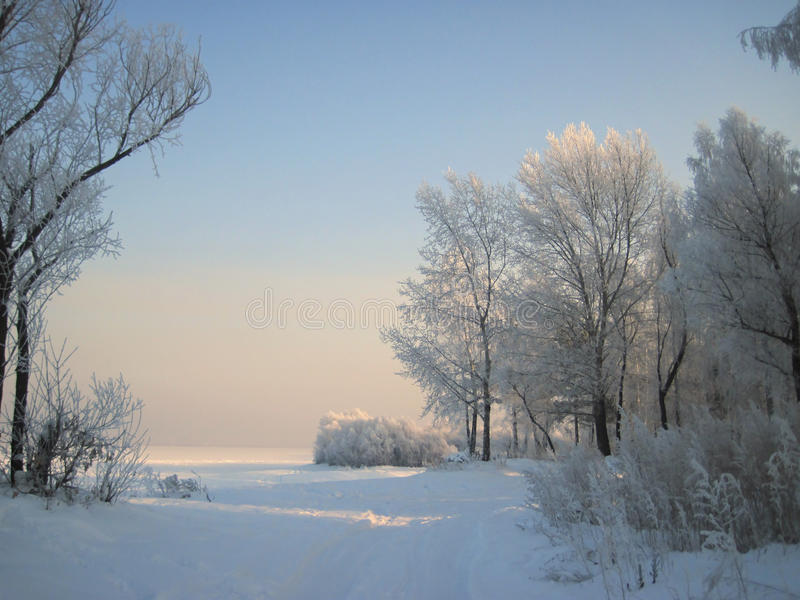 Vinter royaltyfria bilder