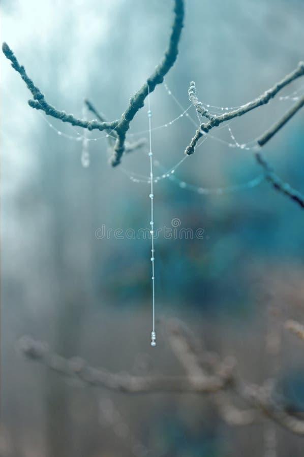 Vinter - bräckligt spindelsilke arkivbilder