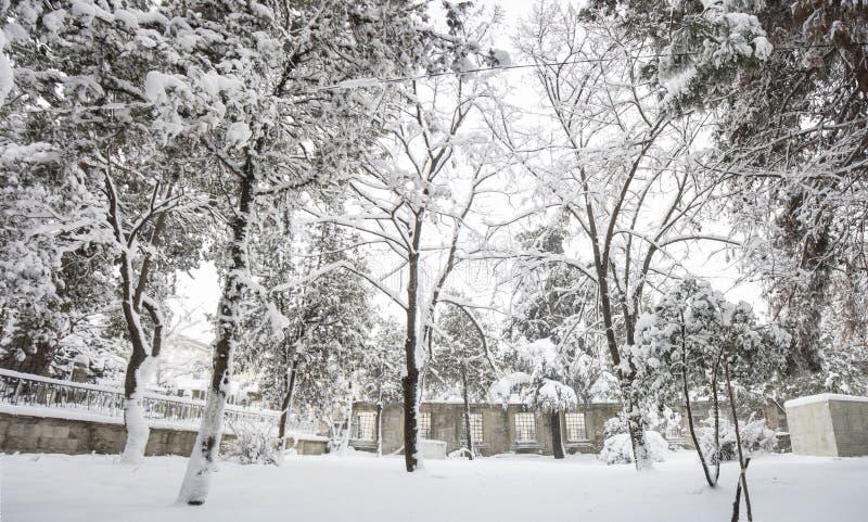 vinter för blåa snowflakes för bakgrund vit royaltyfria foton