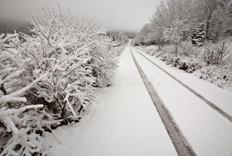 vinter för cypressdagkullar royaltyfri bild