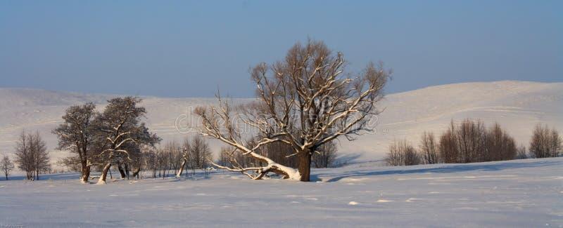 vinter för designbildtree royaltyfria foton