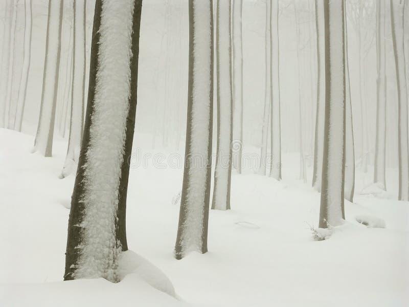 vinter för dimmaskogsnow arkivfoton