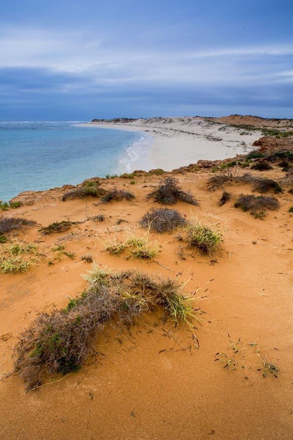 Vinter för kust för hav för Ningaloo revAustralien strand härlig royaltyfri fotografi