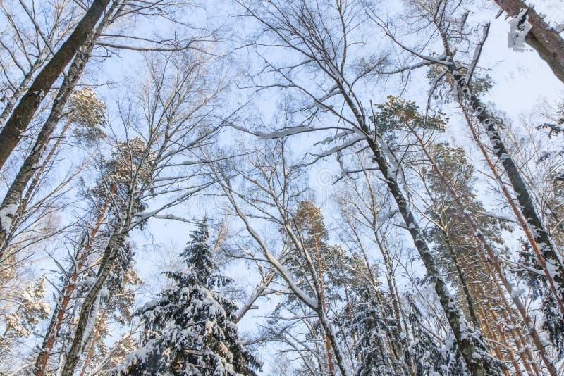 vinter för ligganderyssby trees för snow för hakasianovember sberia royaltyfria bilder