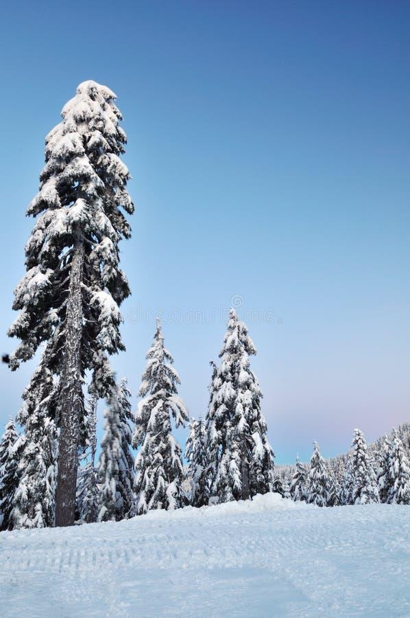 vinter för morgonmonteringsseymour arkivfoto