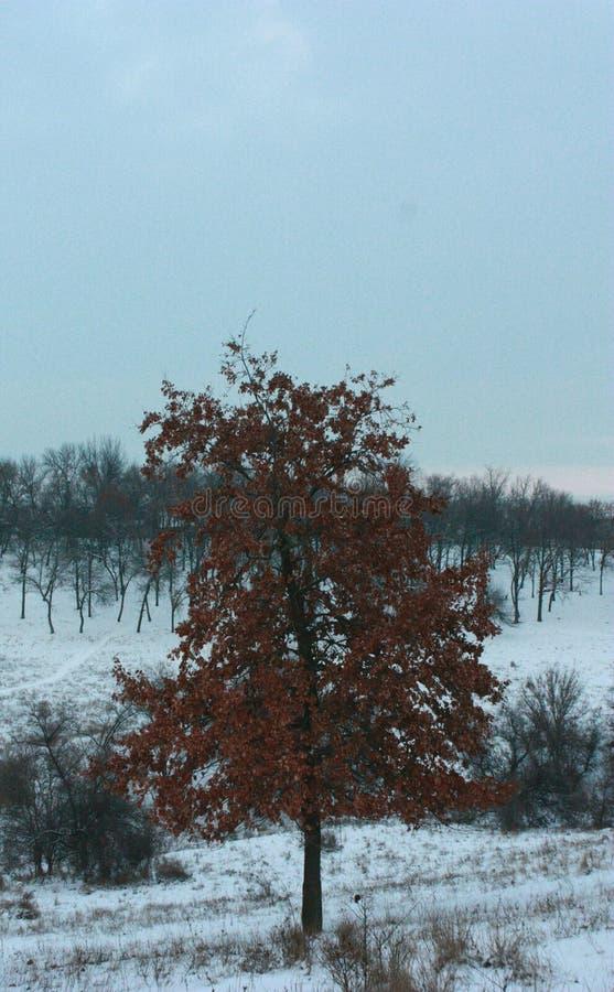 Vinter för orange träd royaltyfri bild
