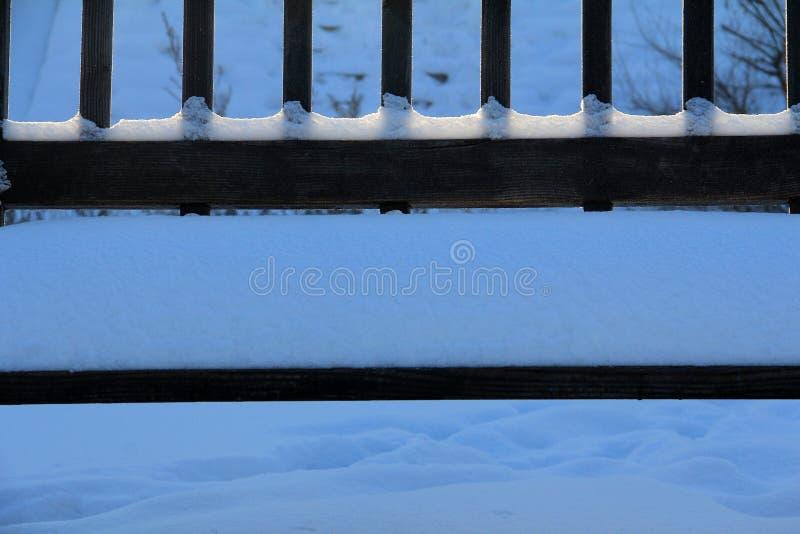 vinter för sikt för tree för filialgransnow royaltyfri foto