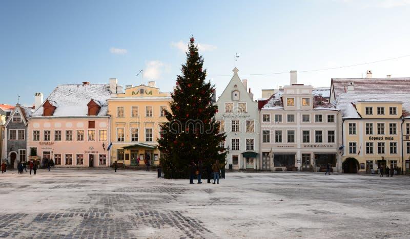 vinter för sikt för tree för filialgransnow Monument Torgils Knutsson tallinn estonia arkivfoton