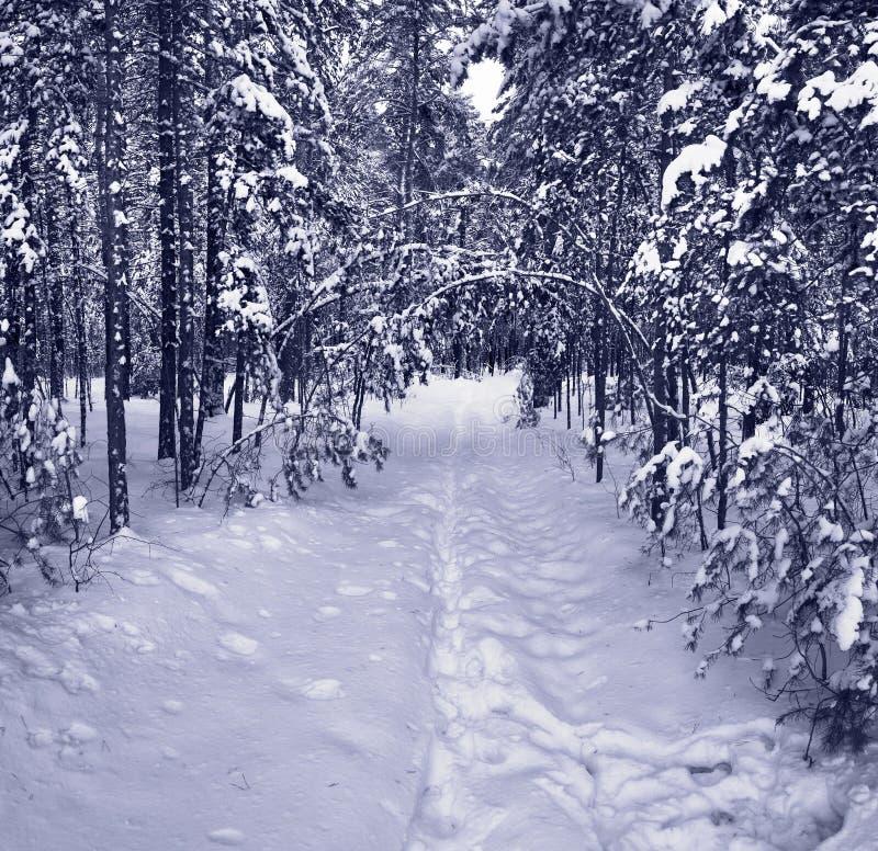 vinter för skogbanasnow royaltyfri bild