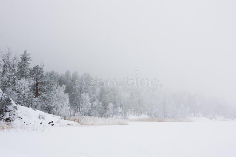 vinter för skoglakemorgon royaltyfria bilder