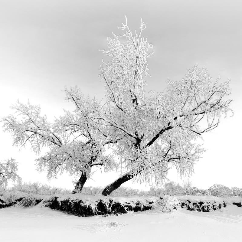 vinter för skognatursun fotografering för bildbyråer