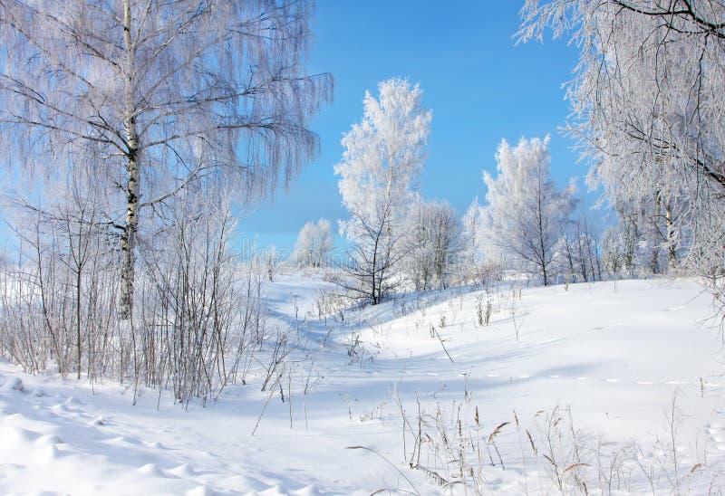 vinter för skognatursun arkivbild