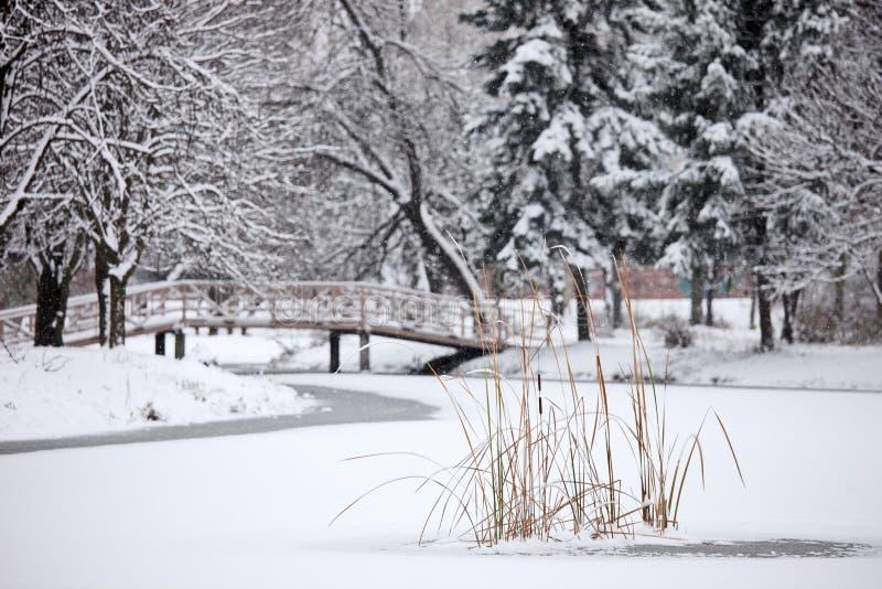 vinter för stadsparkplats royaltyfria bilder