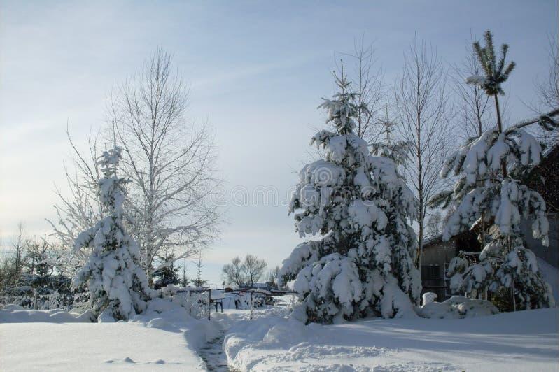 vinter för trädgård för bakgrundsskönhetdesign din snöig fotografering för bildbyråer