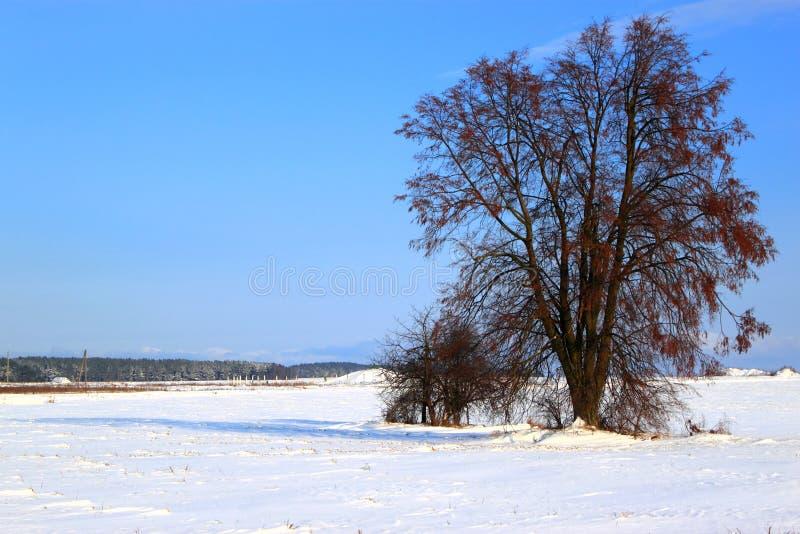 vinter för treesikt royaltyfri foto