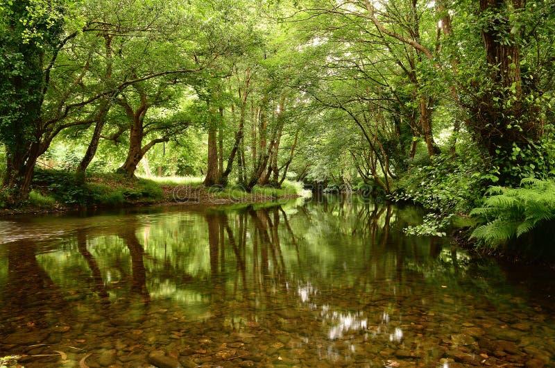vinter för vatten för flod för kustisliggande arkivbild