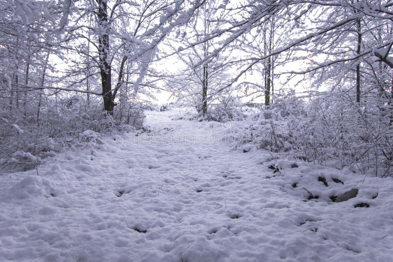 Vinter Forest Landscape Trail At Sunrise arkivfoton