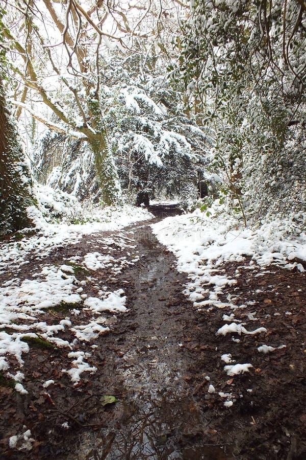 Vinter Forest Pathway royaltyfri bild